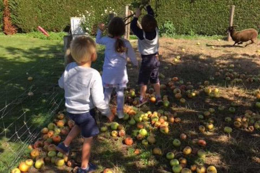 Er liggen veel appels op de grond